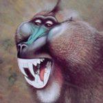 Ilustración Theropithecus cf. Oswaldi